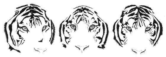 3 illustrated tiger faces